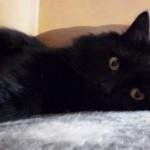 Consigli per dare un nome al gatto